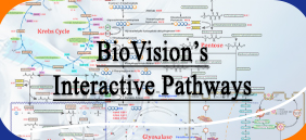 Interactive Pathway