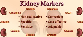 Kidney Markers