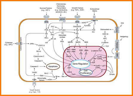 Cytokines, Growth Factors & Hormones