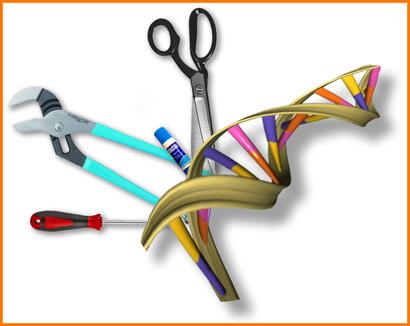 Molecular Biology Tools | BioVision, Inc