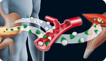 Drug Metabolism Research