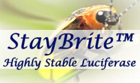 StayBrite Luciferase