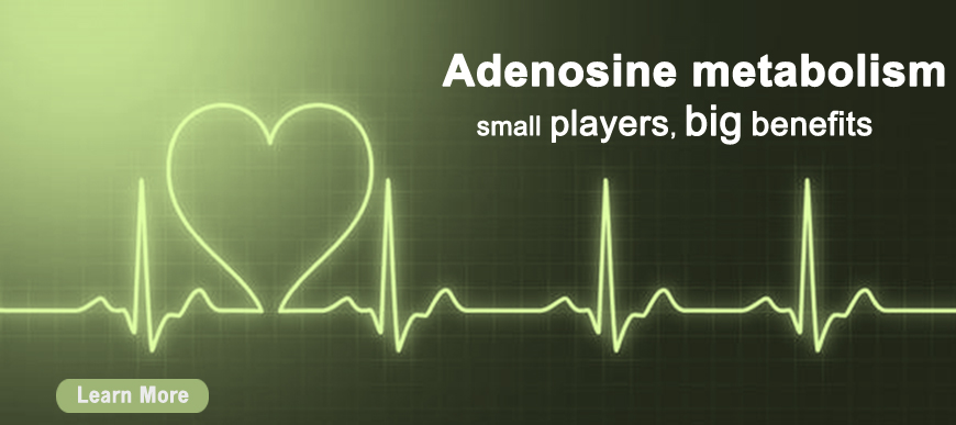 Adenosine Metabolism
