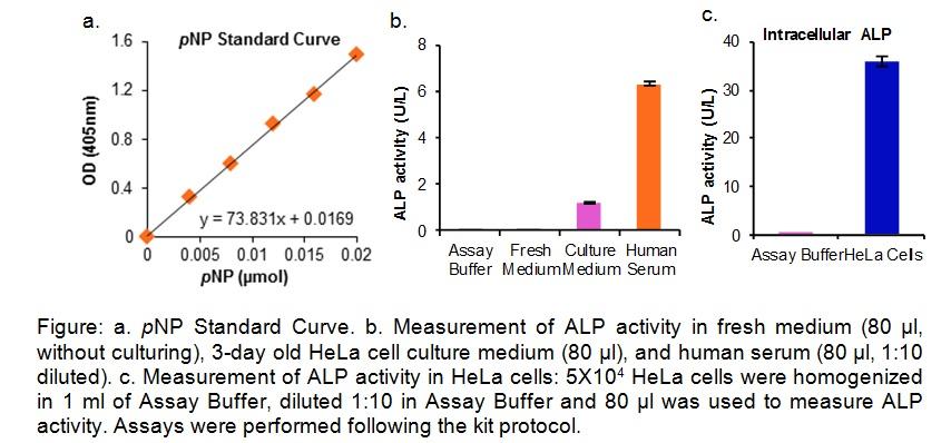 Alkaline Phosphatase Activity Colorimetric Assay Kit