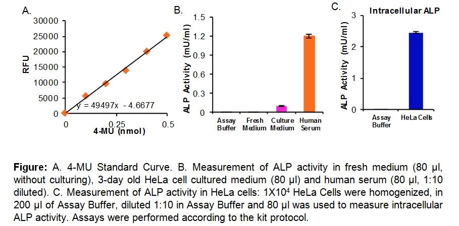 Alkaline Phosphatase Activity Fluorometric Assay Kit