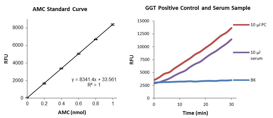 Gamma Glutamyl Transferase (GGT) Activity Fluorometric Assay Kit