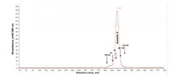 Annexin V, human recombinant