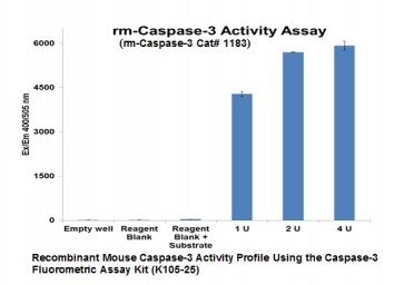 Active Recombinant Mouse Caspase-3