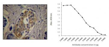 C-Peptide Antibody (Clone HCP-B2)