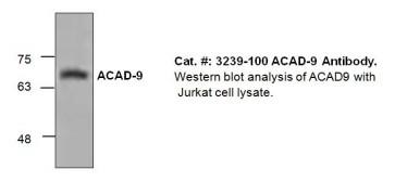 ACAD-9 Antibody