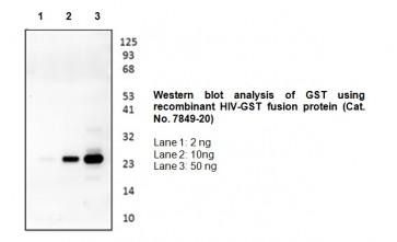 GST-Tag Antibody