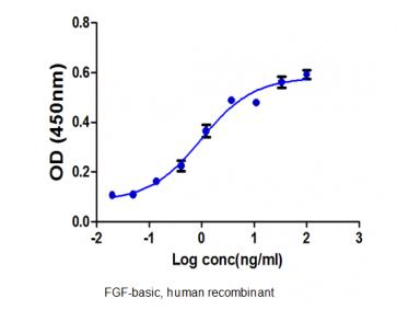 FGF-basic 147, human recombinant