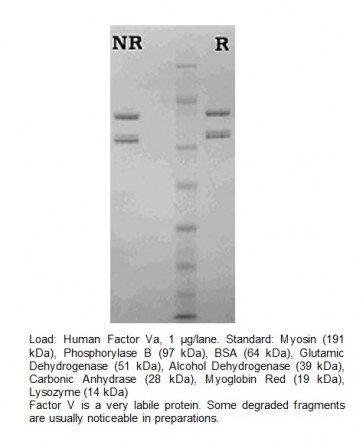 Factor Va, Human Plasma