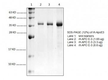 ApoE3, human recombinant