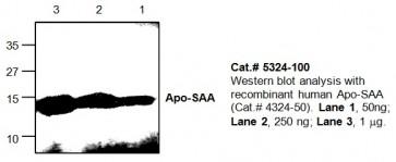 ApoSAA Antibody