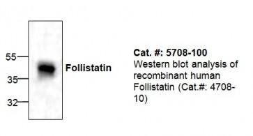 Follistatin Antibody