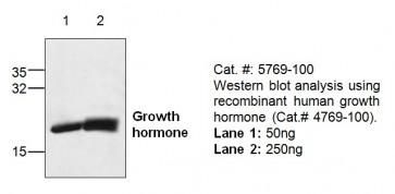 GH (Growth Hormone) Antibody