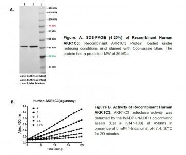 Human Recombinant AKR1C3
