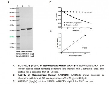 AKR1B10, human recombinant