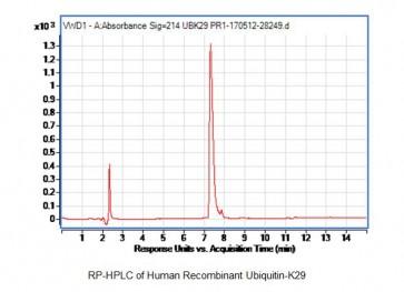 Human Recombinant Ubiquitin-K29