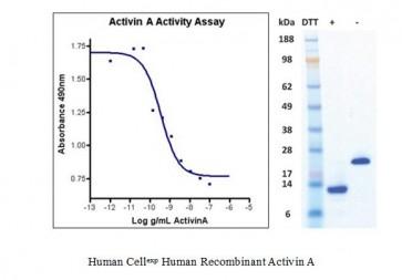 Human CellExp™ Activin A, Human Recombinant