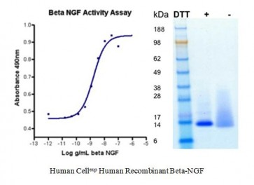 Human CellExp™ Beta-NGF, Human Recombinant