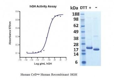 Human CellExp™ HGH, Human Recombinant