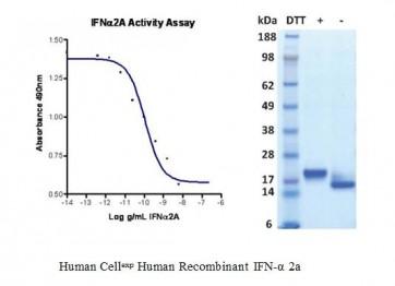 Human CellExp™ IFN-alpha 2a, Human Recombinant