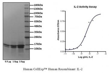 Human CellExp™ IL-2, Human Recombinant