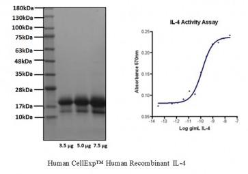 Human CellExp™ IL-4, Human Recombinant