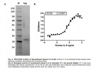 Human CellExp™ IL-6, Human Recombinant