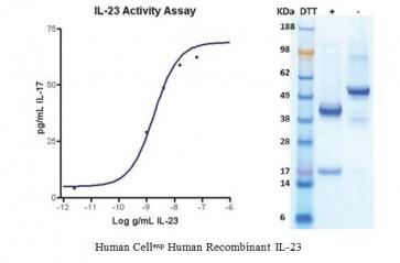Human CellExp™ IL-23, Human Recombinant