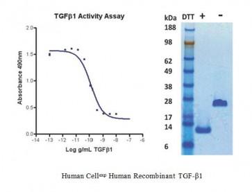 Human CellExp™ TGF-beta 1, Human Recombinant