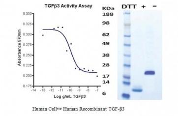 Human CellExp™ TGF-beta 3, Human Recombinant