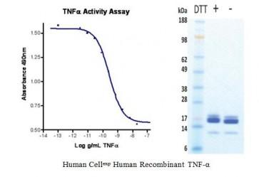 Human CellExp™ TNF-alpha, Human Recombinant