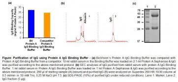 Protein A IgG Binding Buffer