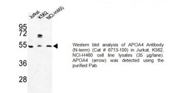 ApoA4 Antibody (NT)