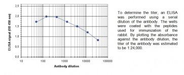ASH2 polyclonal antibody