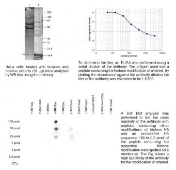 H3K18ac polyclonal antibody