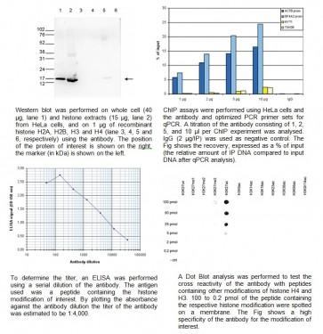 H3K27ac polyclonal antibody