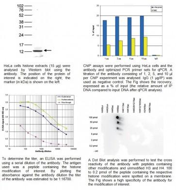 H4K8ac polyclonal antibody