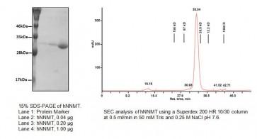 Nicotinamide N-Methyltransferase, Human Recombinant (hNNMT)