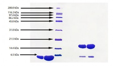 Apolipoprotein AII, Human Plasma