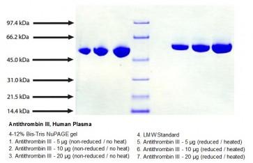 Antithrombin III, Human Plasma