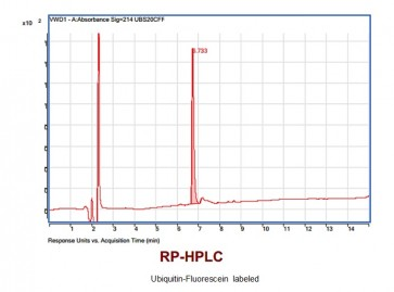 Ubiquitin-Fluorescein-labeled (FLR-Ub)