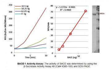 Active Recombinant Human beta-Secretase 1 - BACE-1