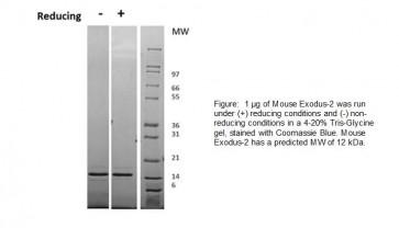 Exodus-2, Mouse Recombinant