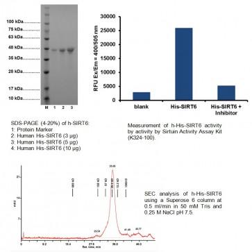 Active SIRT6 (His-tagged), human recombinant