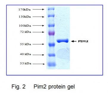 PIM2, Active