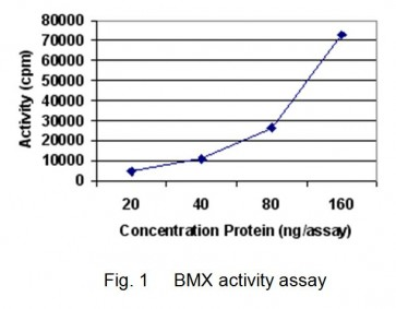 BMX, Active